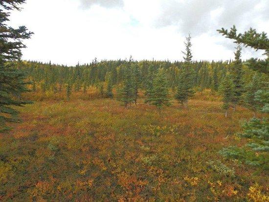 White Moose Lodge: Alaskan Tundra