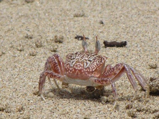 Panama RoadRunner Transportation : Crab on the beach