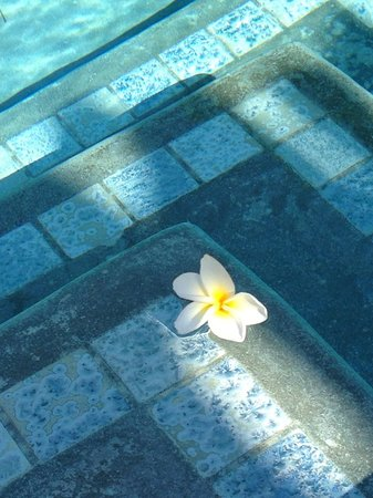 Wailuku Guesthouse: Plumeria blossom floating in the pool