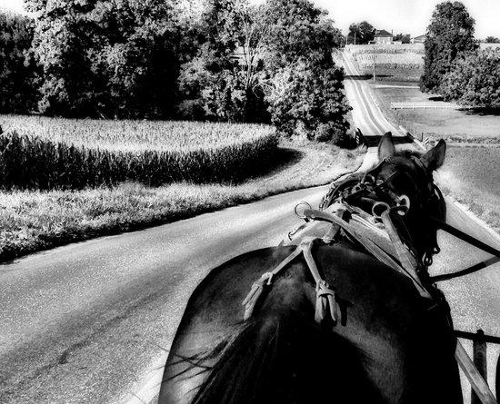 Ed's Buggy Rides: Farmland