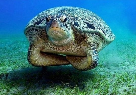 SEAWOLF - Divers: ... see you next dive...