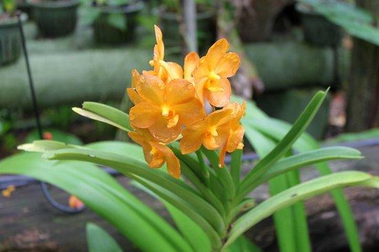 Thavorn Palm Beach Resort: в саду орхидей