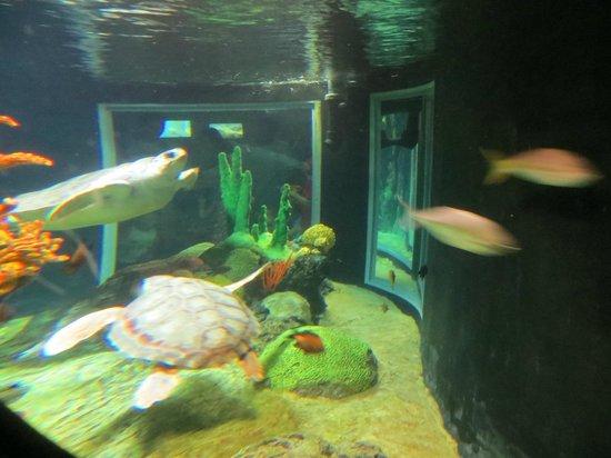 Lisbon Oceanarium: turtles