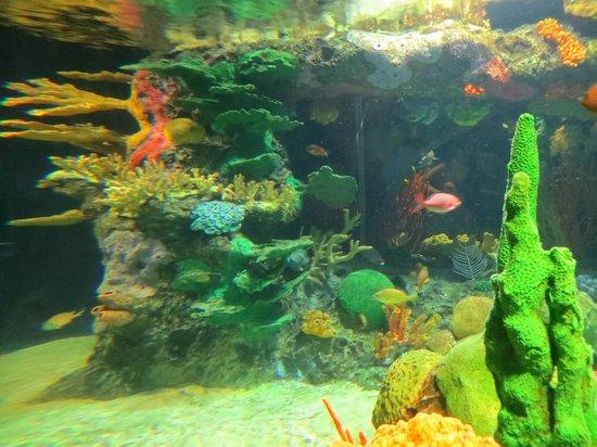 Lisbon Oceanarium: small tank