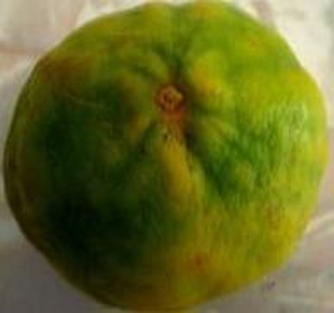 Golden Oven: Bangladeshi Shatkora Citrus lemon try chicken or lamb shatkora