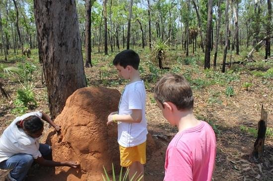 Northern Territory Indigenous Day Tours: mmm yum a termite mound tasting!