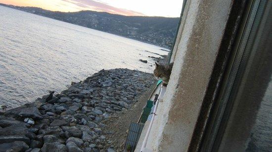 Hotel Rocce del Capo: В соседнем номере жили путешественники с кошкой