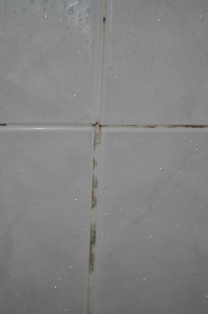 Claremont Hotel : Mould between tiles