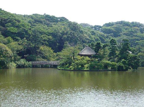 Yokohama, Giappone: 池の調べ