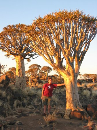 Quivertree Forest and Giant's Playground: Sonnenuntergangsspaziergang