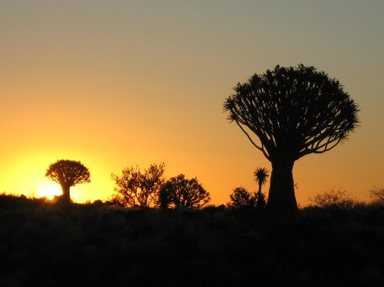 Quivertree Forest and Giant's Playground: sundowner