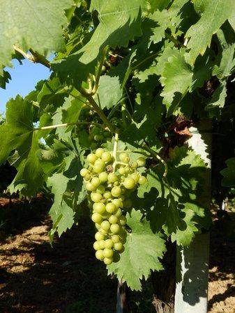 Antico Casale Venturi B&B: and lot of wine from the region