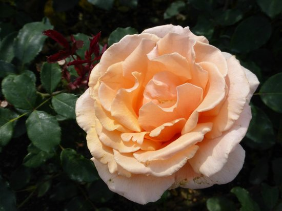 The Butchart Gardens: Flower