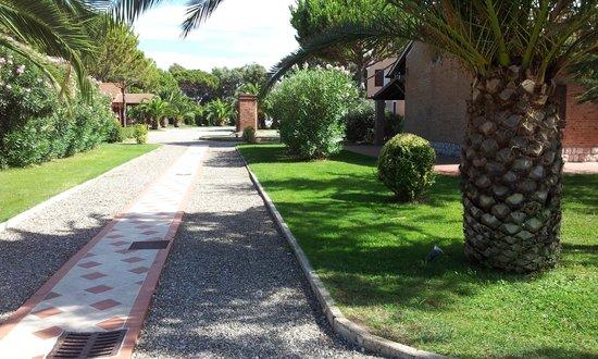 Fattoria San Lorenzo: viale interno
