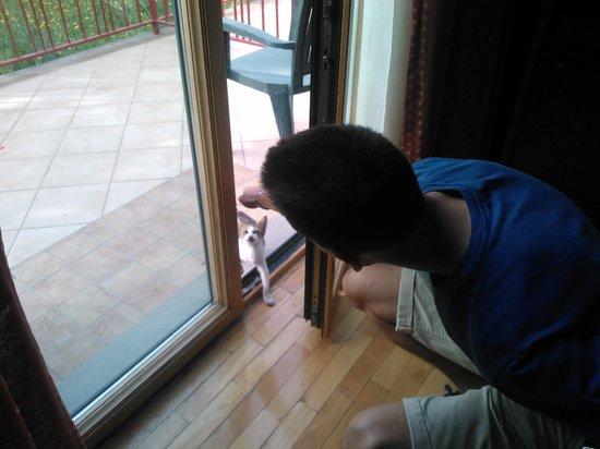 Hotel Semifonte : Gattino che vuole entrare in camera
