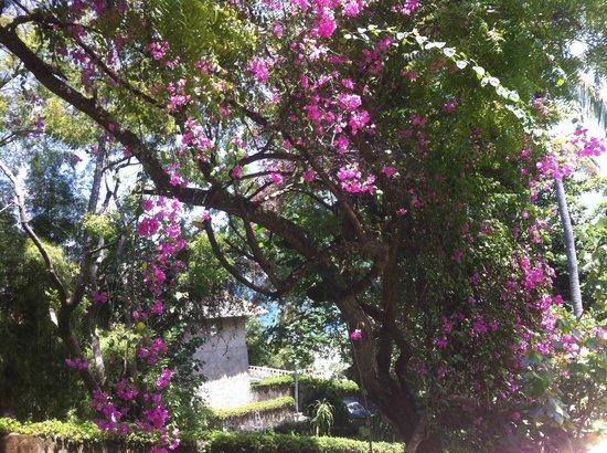 Amankila : lush garden