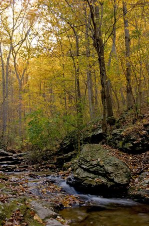 Cockeysville, MD: Oregon Ridge stream in the fall
