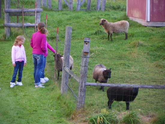 Sandtown Farmhouse Bed and Breakfast: petting the sheep