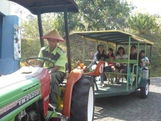 Pasuruan, Индонезия: kelililing diarea Bhakti alam dengan kereta traktor