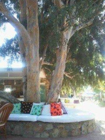 Okaliptus Hotel: outside bar area