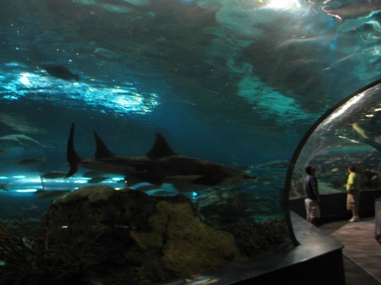 Ripley's Aquarium of the Smokies: This is not worth $50+ for 2 adults.
