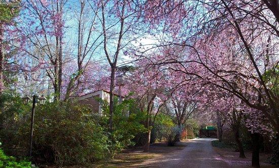 Casa Glebinias: lovely garden with spring in bloom