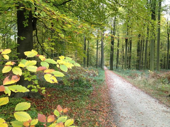 Forêt de Soignes : will soon be decked in autumn gold