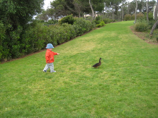 PURAVIDA Resort Blau PortoPetro: Un pato, compañero de jardín