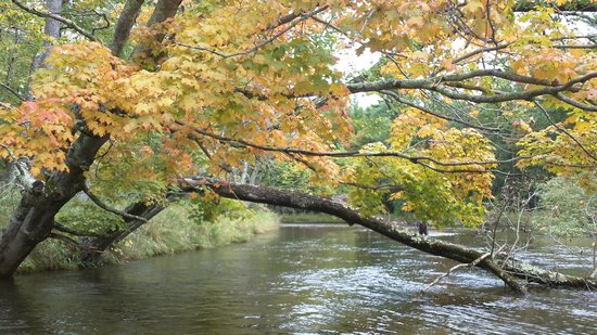Pere Marquette River Lodge: floating down the river