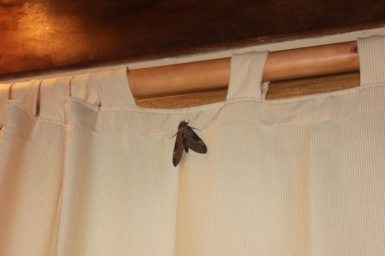 Pranamar Villas and Yoga Retreat: one of our many massive moths inside our room