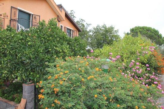 B&B Villa Maria Giovanna: giardino estrerno