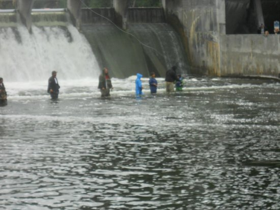 Salmon fishing at the dam at hamlin lake picture of for Ludington fishing report