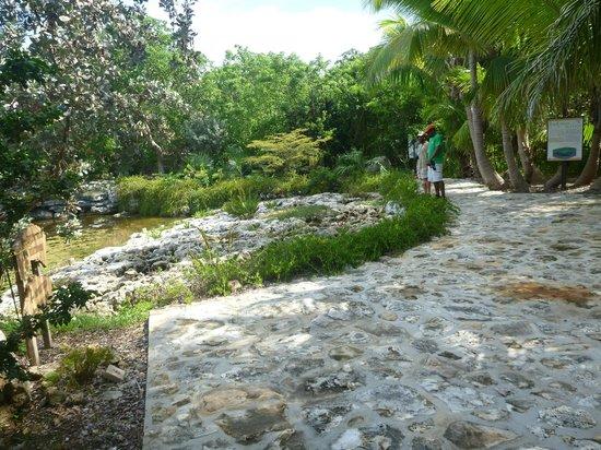 Leon Levy Native Plant Preserve: Pond near front entrance with Preserve Staff