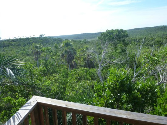 Leon Levy Native Plant Preserve: View from tower