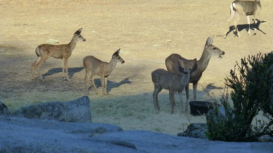 Restful Nest Bed and Breakfast: Teatime for deer