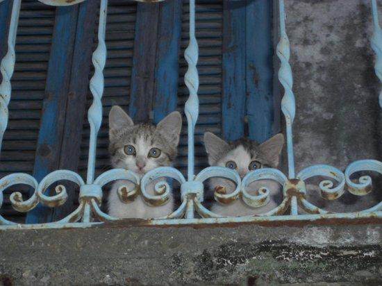 Taverna Alexandros: Kittens on balcony above taverna