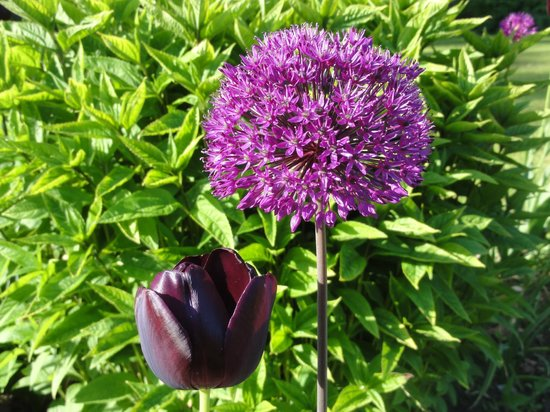 Blackbirds Cottage Bed & Breakfast: Flowers