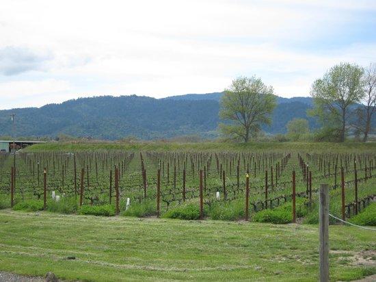 Napa Valley, Kalifornien: Beautiful vinyards