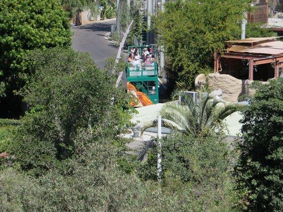 Treetops Cafe San Diego Zoo