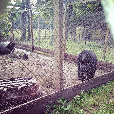 Bailiwick Animal Park : Teddy