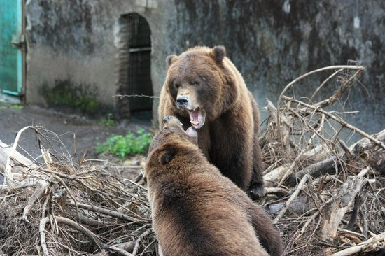 Fortress of the Bear : Brother and Sister get playful