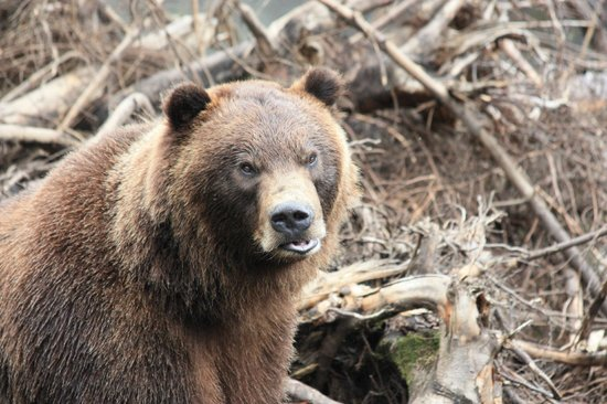 Fortress of the Bear : Big Brother stakes out the top of the hill.