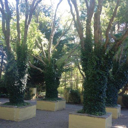 Sonoma Coast Villa Resort and Spa: Gardens
