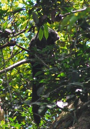 Libertad Jungle Lodge: monk saki monkey