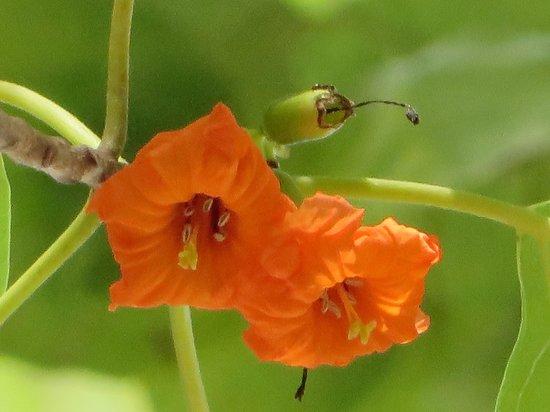 Bokissa Private Island Resort : nature