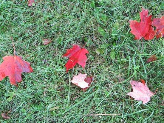Inn on the Moraine: Fall Colors