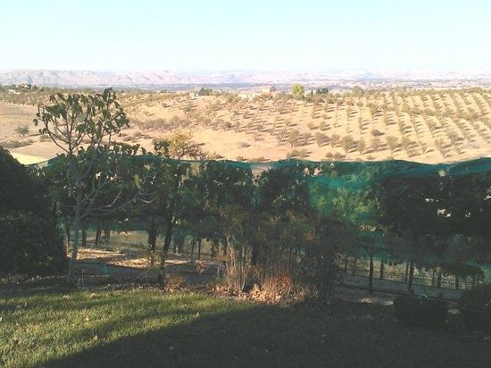 Seven Quails Vineyards Bed & Breakfast: Beautiful Scenery from