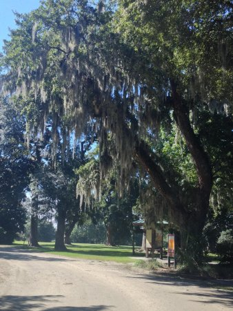 Charles Pinckney National Historic Site: Beautiful there!