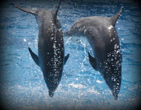Prix rencontre avec les dauphins marineland