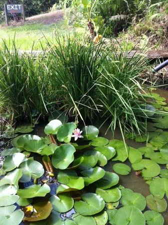 Rossmount Rural Retreat: Lily Pond and Paddy